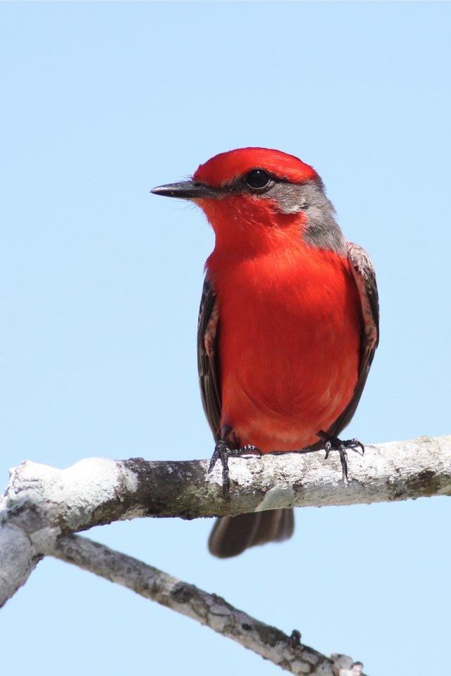 Crooked Tree Bird Sanctuary, Belize