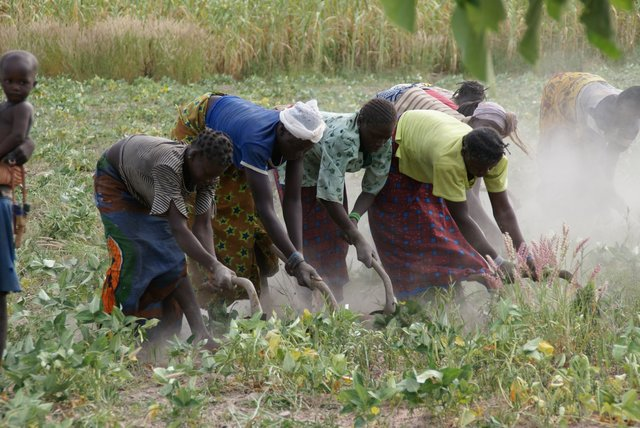 People plowing land in Burkina Faso