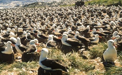 Falkland Islands Visa General Information and Eligibility