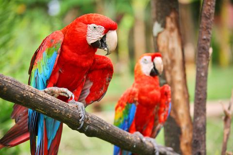 Guyana Tourist Visa