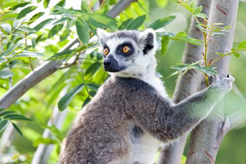 Madagascar Student Visa
