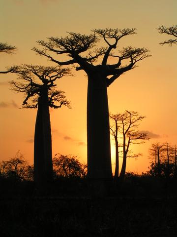 Madagascar Tourist Visa