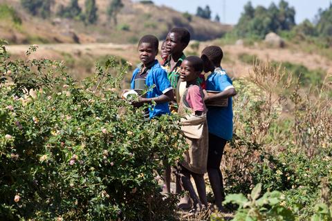 Malawi Temporary Residence Permit