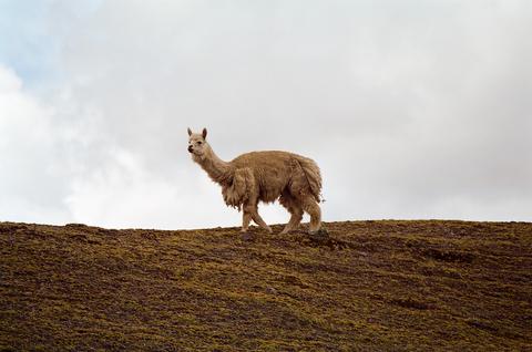 Peru Religious Visa